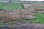 Images for Steadings, Bogs of Blervie, Califer, Forres